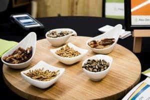 Challenges Gustatifs : dégustation d'insectes